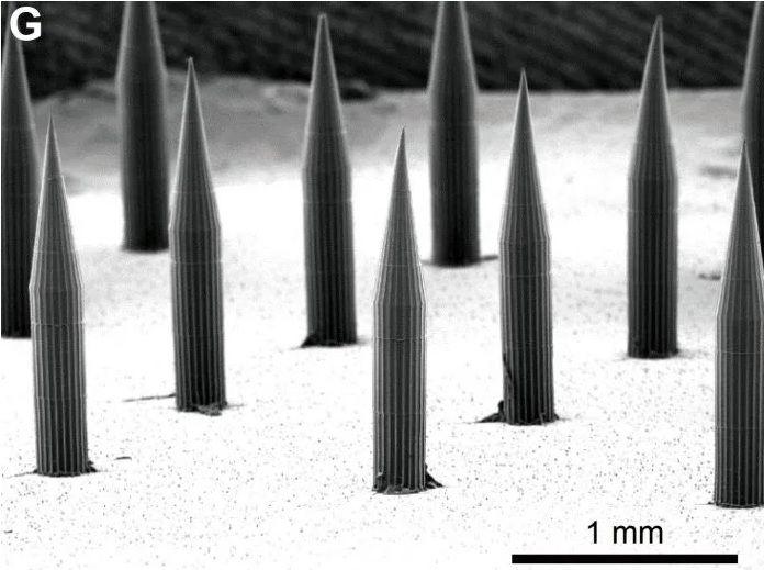 Una imagen de microscopio de primer plano de la matriz de microagujas, que podría introducir puntos cuánticos en la piel. Crédito: KJ McHugh et al. Ciencia Medicina Traslacional  (2019)