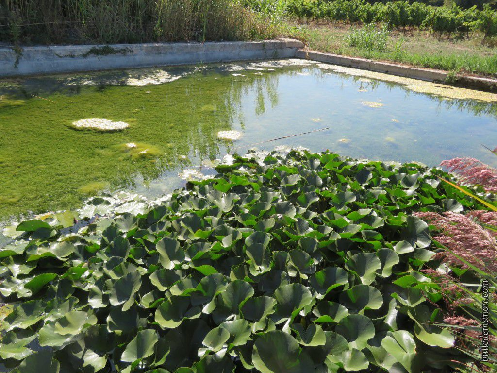Le bassin de la source