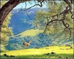 Les vignobles de la côte centrale de Californie