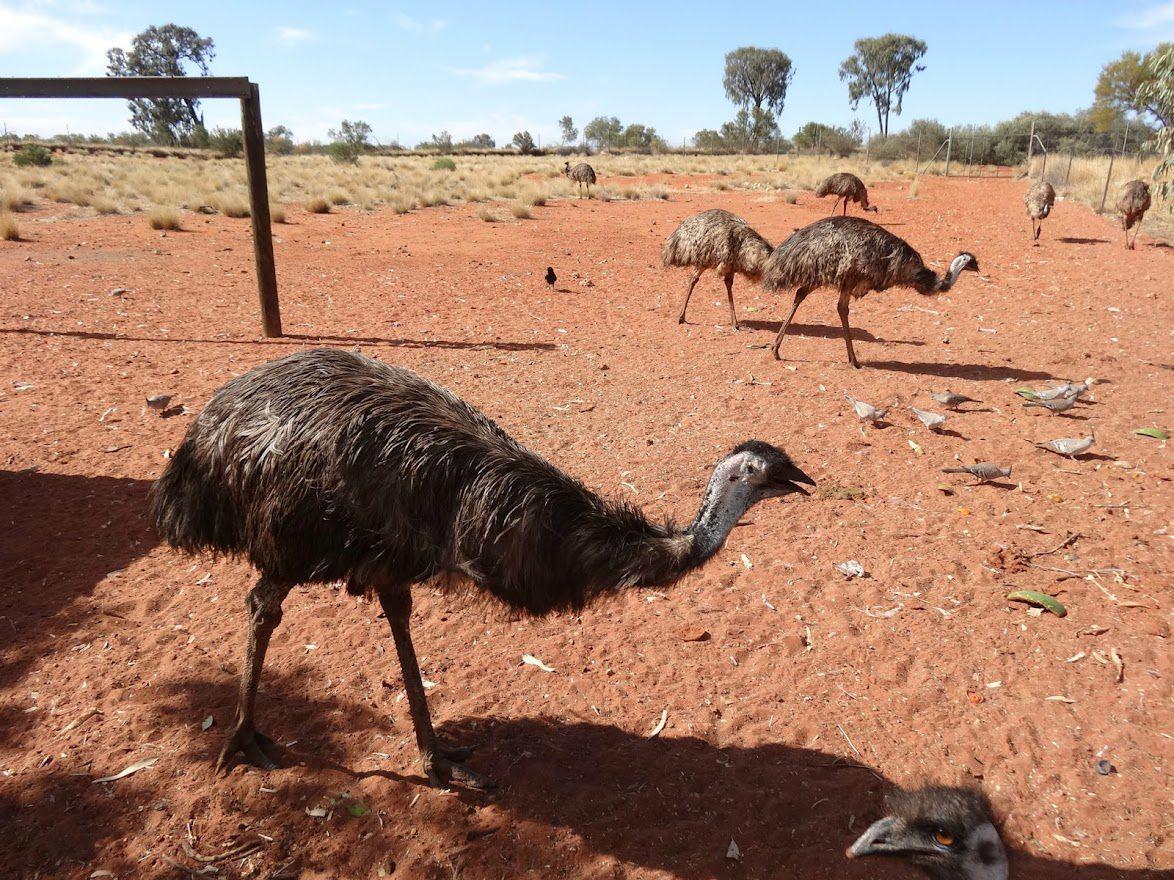 AUSTRALIE : Grand voyage (2)
