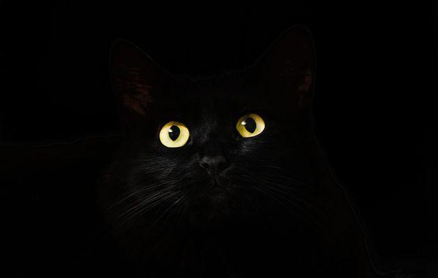 Votre chat détient-il des pouvoirs ?