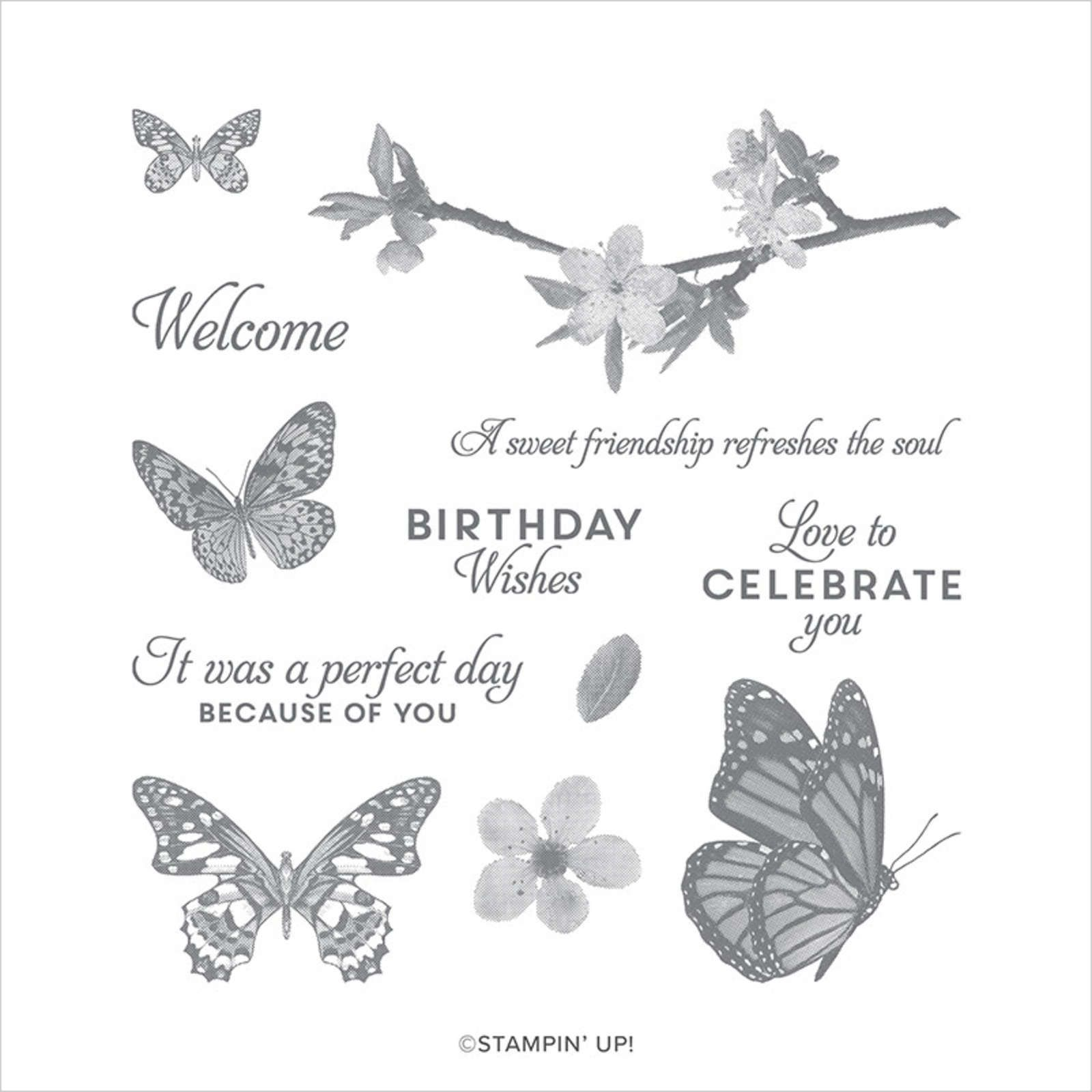 149346 Set de tampons Butterfly Wishes Stampin up