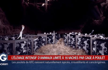 [Vidéo] L'élevage intensif d'animaux désormais limité à 16 vaches par cage de poulet