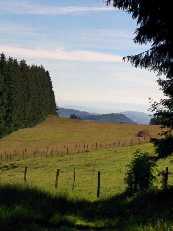Le Sancy, entre forêt et estive... plus qu'un paysage !