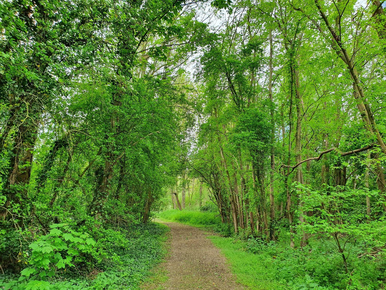 Le Marais, à Bénifontaine et Hulluch
