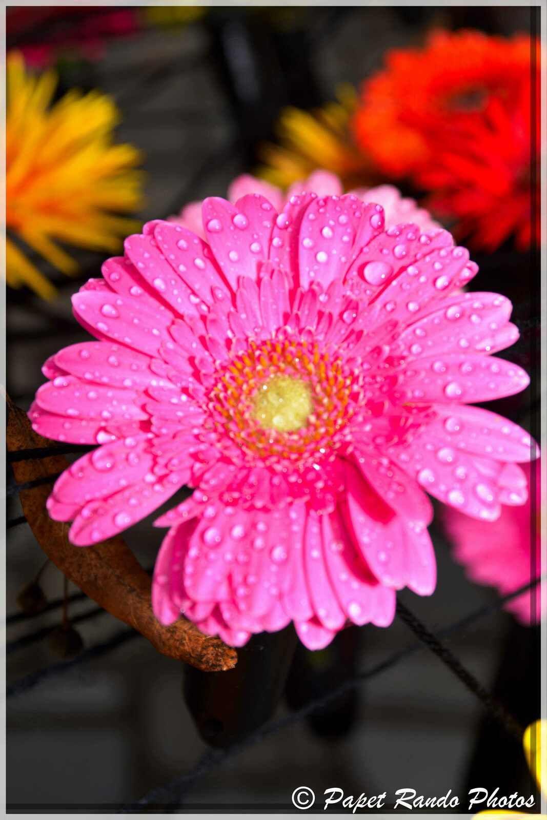 Fleurs Amour au Chateau de Bilzen le paradis des fleurs