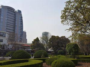 Shanghai, la concession française et les cerisiers en fleurs.