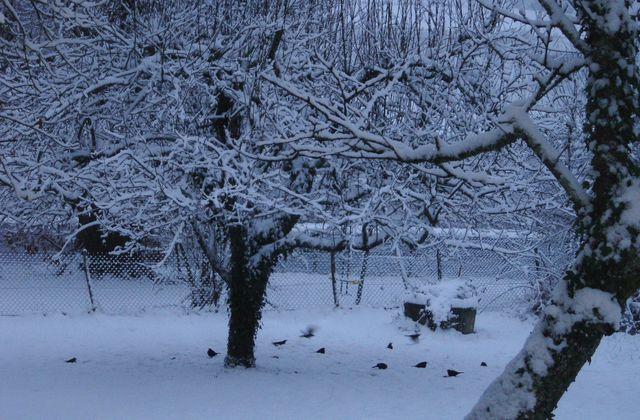 Finie la neige, les petits amis