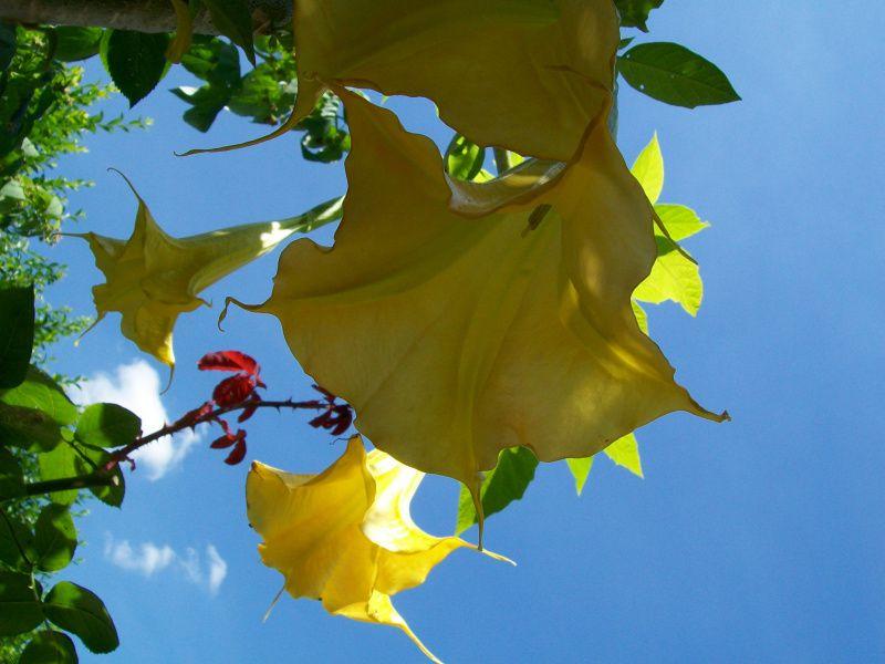 Un tout autre langage de fleurs. Photographies non libres de droits.