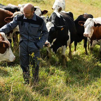 Danone pousse les éleveurs de vaches vers l'alimentation 100 % française