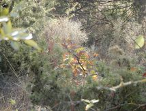 Garrigue d'automne (septembre 2017)