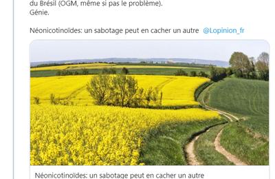 «Néonicotinoïdes: un sabotage peut en cacher un autre» de Mme Emmanuelle Ducros dans l'Opinion