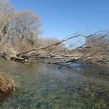 Travaux d'entretien des cours d'eau  du bassin du Verdon, secteur Artuby Jabron