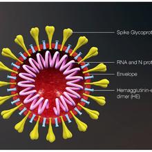 Coronavirus et tests et futurs traitements : un appel à la gra-tui-té... et à dons de SumOfUs...