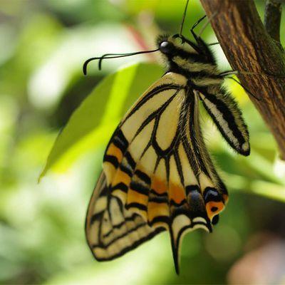 La naissance de papillons