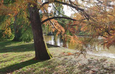 L'automne dans un parc bordelais - Suite.