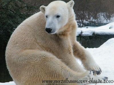 Knut am 29. Januar 2010