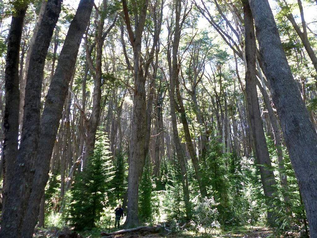Cherchez le petit homme parmi les grands arbres !