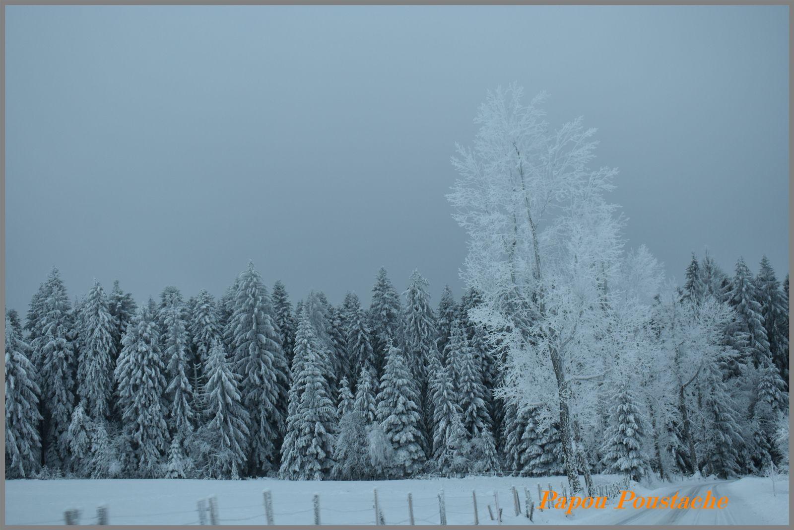 Balade hivernale en Livradois Forez