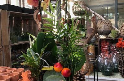 Passion Orchidées !