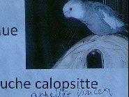 LES OISEAUX/ SPOV,LPO,VETERINAIRE,ECOLE VETERINAIRE, www.ambassadedespigeons.com ( oiseaux blessés, nichées du printemps ) + article de l'association Stéphane LAMART