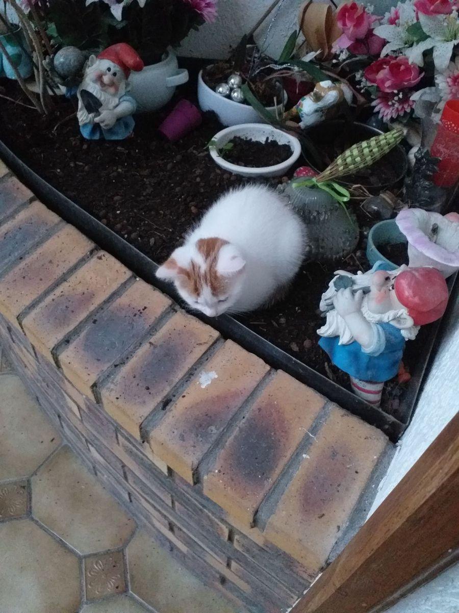 chronique Lennon  : petite sieste dans la terre