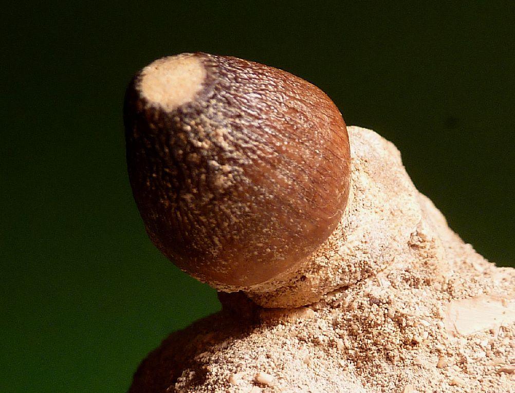 Fossiles du Crétacé du Maroc .