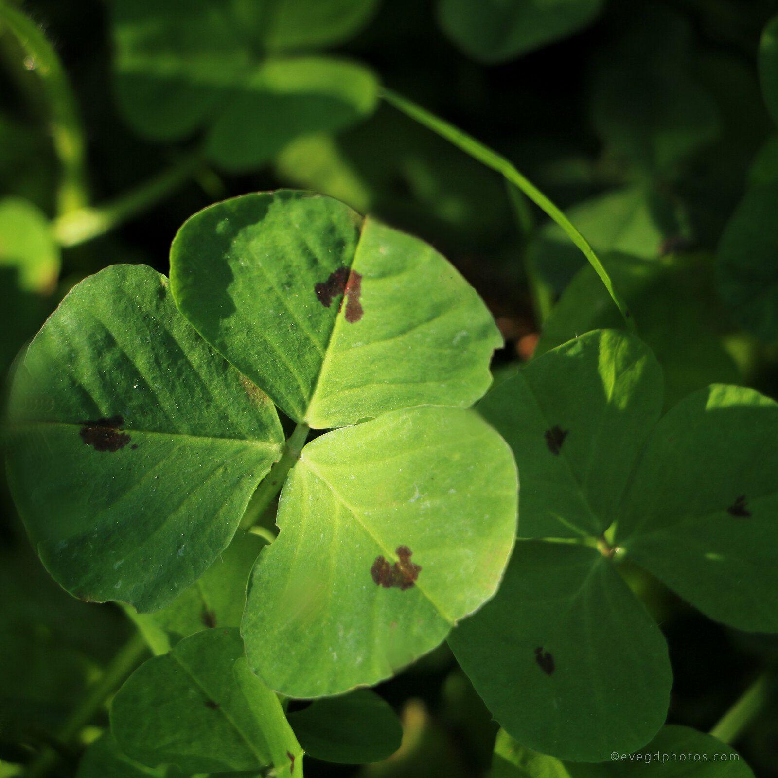 """Pour """"30 Jours pour Changer sa Vision"""" sur Facebook - Thème """"C'est Vert"""""""