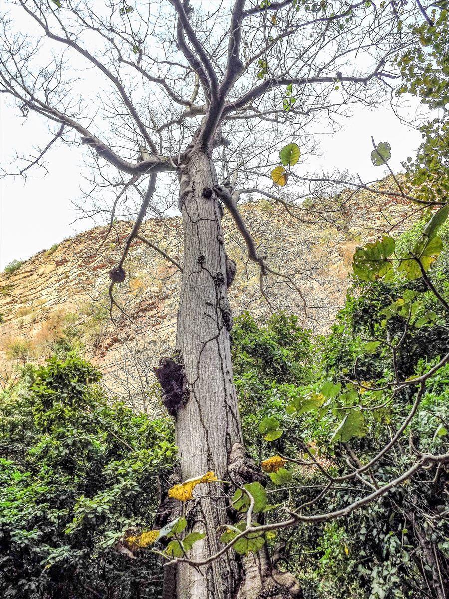 La cascade de Dindefelo