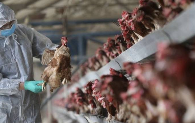 Russia says detected first case of H5N8 avian flu in humans