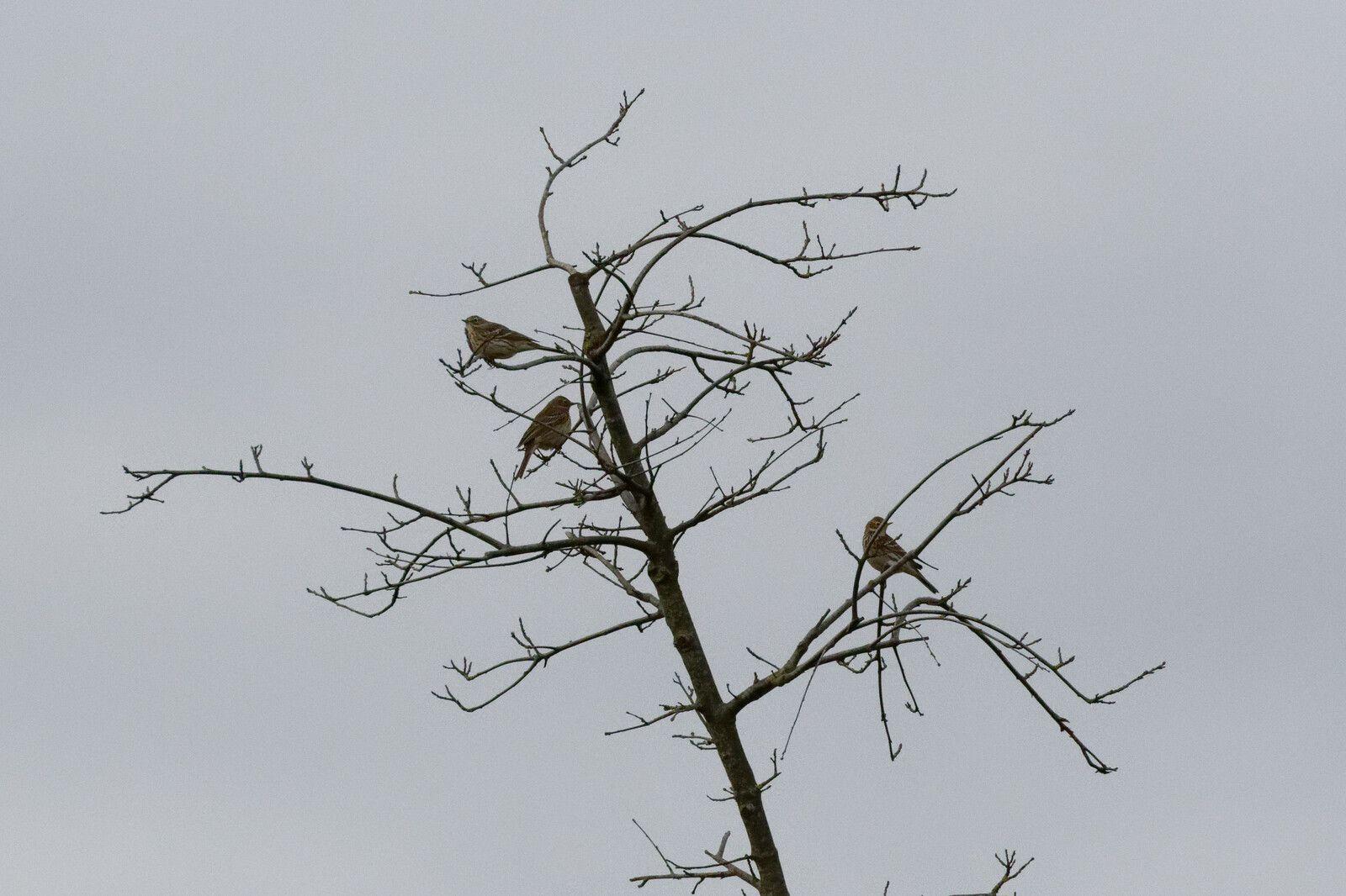 558 - On peut apprendre le monde des Oiseaux à l'Etang du Coq : 08/04/2021