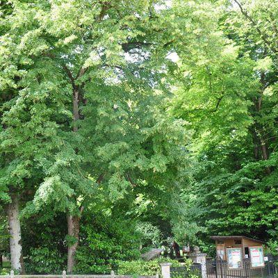 Le parc du Château des enigmes à Pons