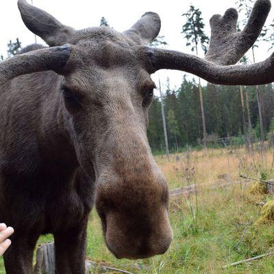Road trip en Scandinavie #6
