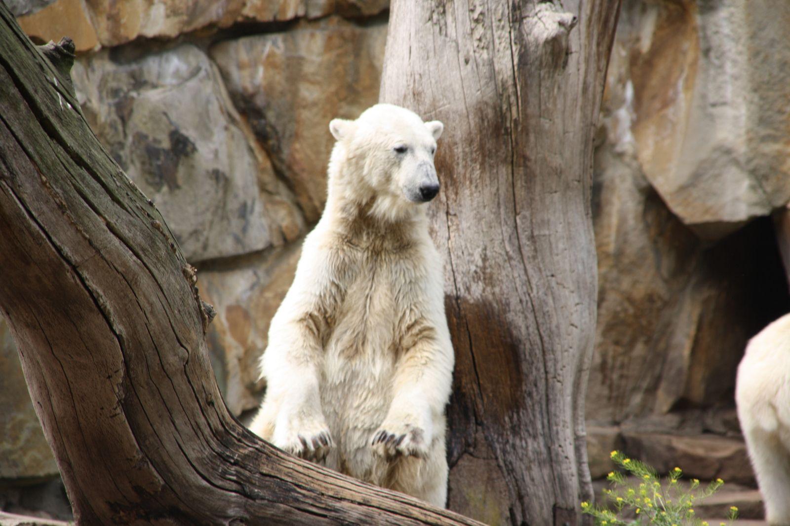 Erinnerung an Knut 2009