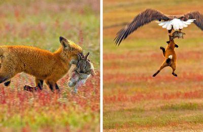 """Juste cause, tromperies idéologiques ? Stop aux anti-chasse """"animalistes"""".."""