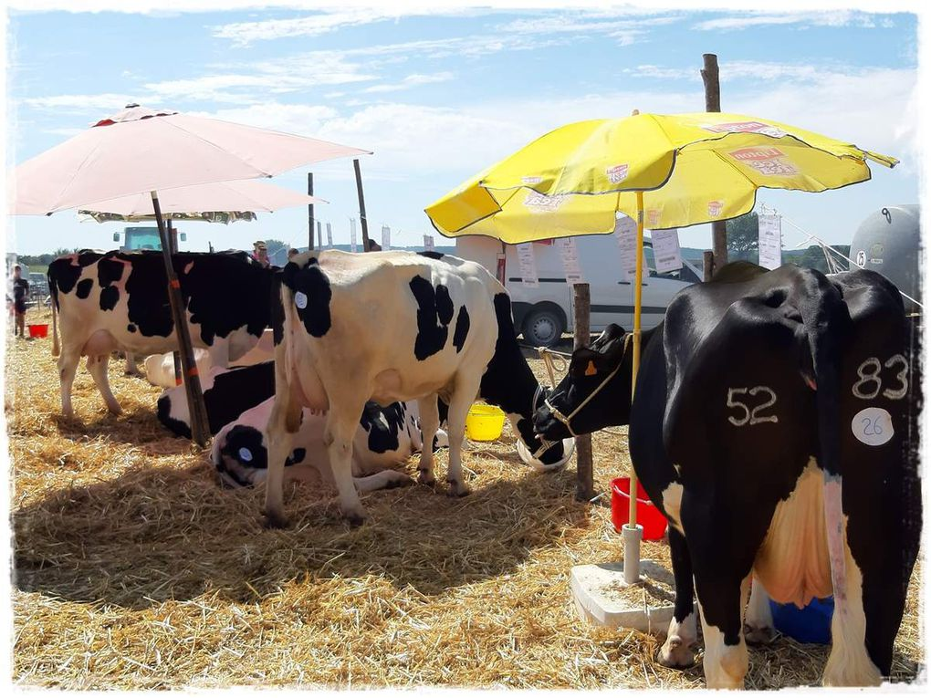 Comice Agricole ..sur le site de Cormeré..défilé des vieux engins agricoles..