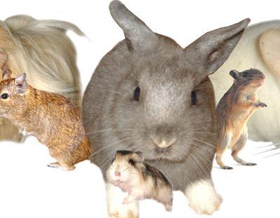 Le marché des petits mammifères