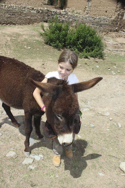 Les ânes se baladent dans le village.