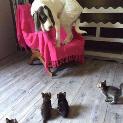 Chien et chatons : le monde à l'envers...