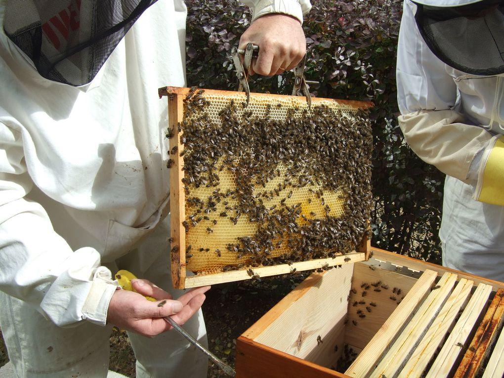 MIse en place d'un rucher en plein quartier des affaires à Paris (La Défense)