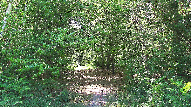 carrefour_Route de l'Aurore_Chemin de la Forêt Saint-Pierre