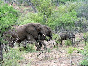 Les éléphants.... de beaucoup plus près ! Impressionnant à quel point ils sont imposants.