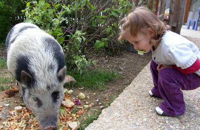 Chèvre, bouc, cochon...nos poubelles écologiques !