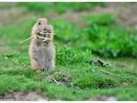 Séjour au parc animalier de Sainte Croix (57) du 19 au 20 mai !