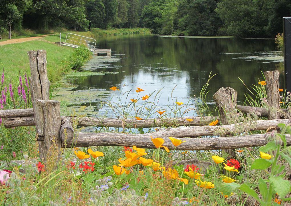 Beautés et merveilles au fil de l'eau...