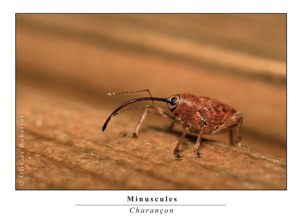 Photos d'insectes divers et variés