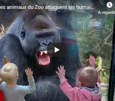 Quand les animaux attaquent les humains cela donne des frissons