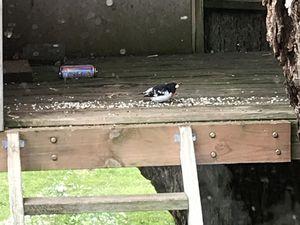 Dans mon jardin... des oiseaux... et un chat :/