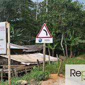 ENQUÊTE 1/3 - L'Europe exploite les forêts tropicales... et multiplie les risques d'épidémie