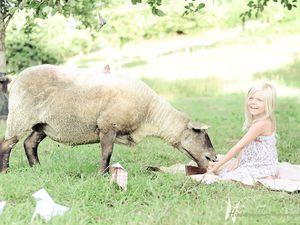 Shooting avec les moutons en Normandie